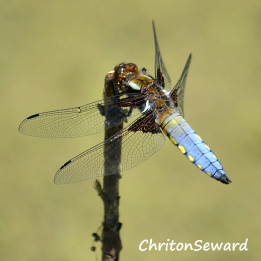 Dragonfly 01