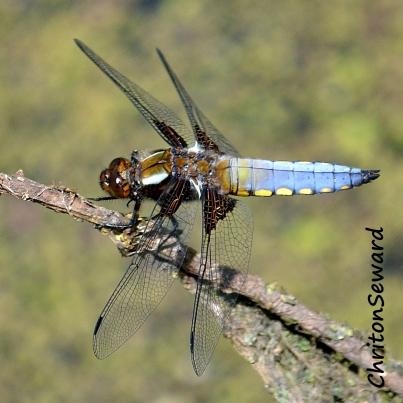 Dragonfly 05