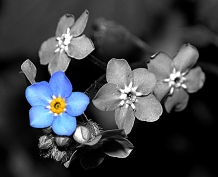 Forget me not 2